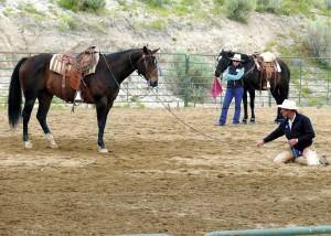 Buck mit Pferd