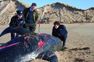 Tote Wale sind das erste Anzeichen für das bevorstehende Unheil (Quelle: Ascot Elite)
