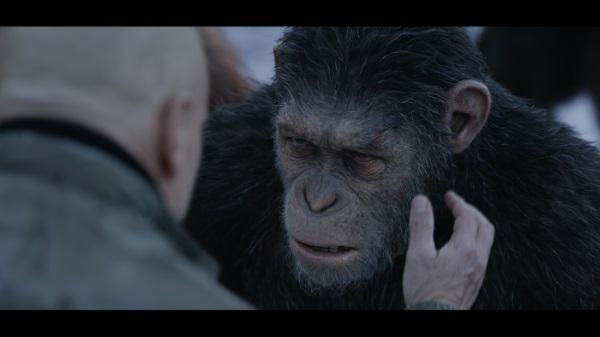 Planet der Affen - Survival (© 2017 20th Century Fox)