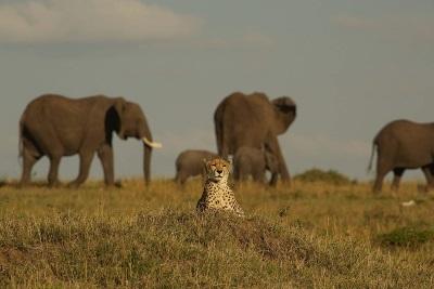 Maleika entspannt in sicherer Entfernung von den Elefanten (© Camino/EuroVideo)